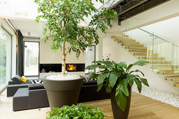 Houseplants growing in large containers in a very modern looking home.