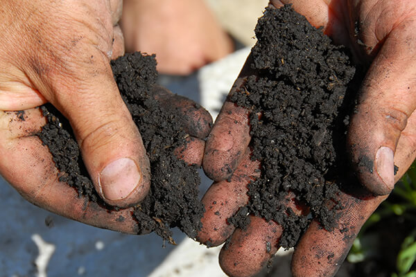 Soil being felt and tested in someone's hands.