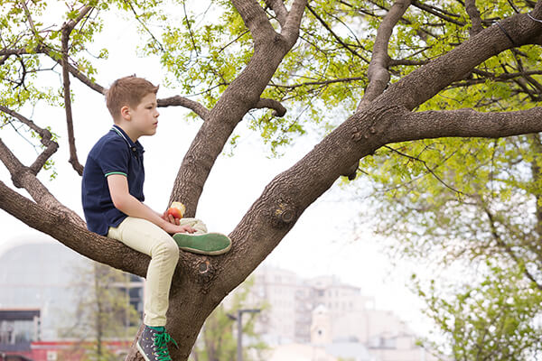A young boy sitting in a tree and pondering the meaning of life. He's also eating an apple.