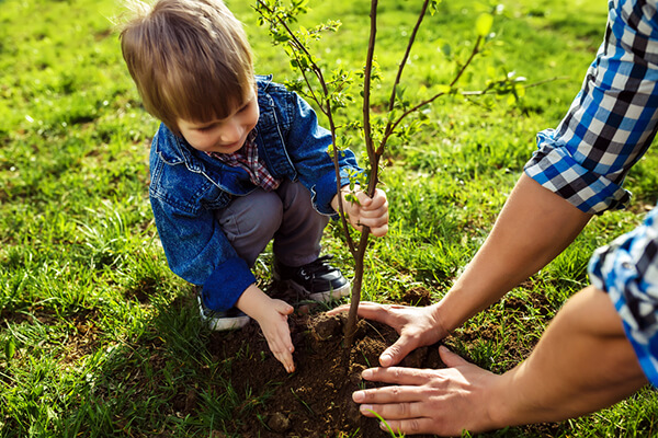 A young child assisting with the transplanting of a young tree in a field of grass.